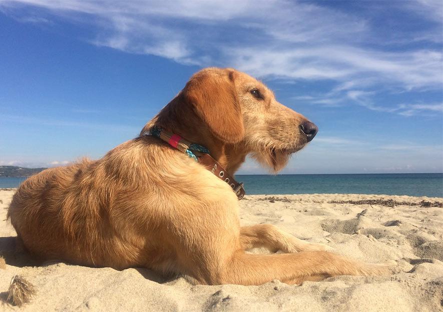 Frieda am Strand