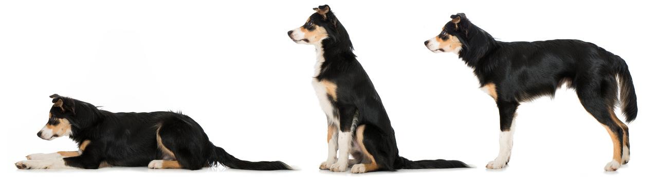 Aktive Bewegungsübungen mit dem Hund
