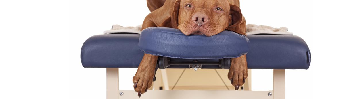 Hund auf der Massageliege