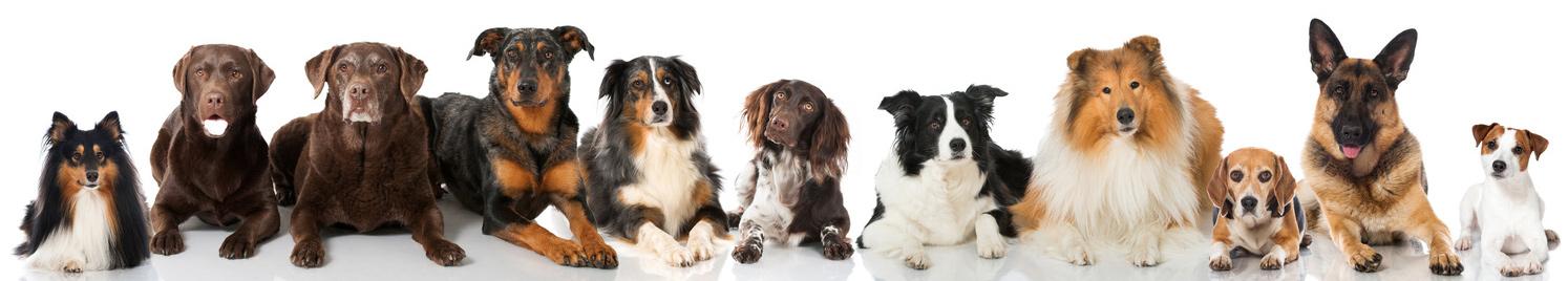 Hunde bei der Physiotherapie