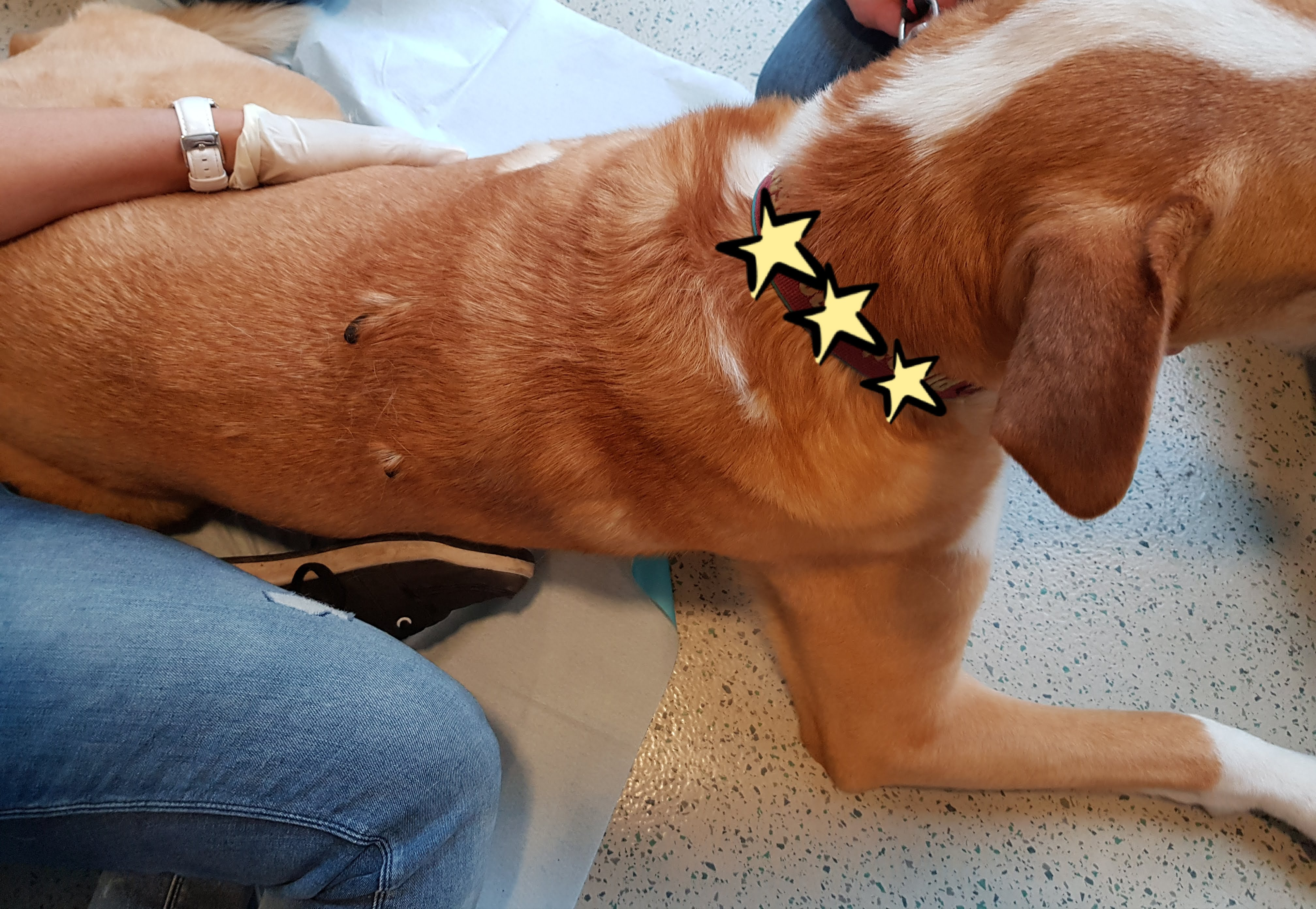 Blutegeltherapie beim Hund